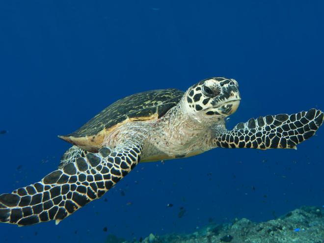 Photo of Sudden death of two turtles at Taraporewala aquarium