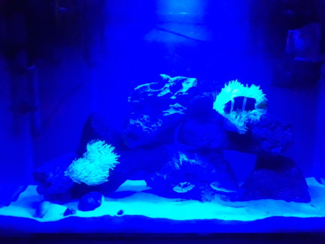 Photo of Simplicity of a Nano Marine Tank- Nano Reef