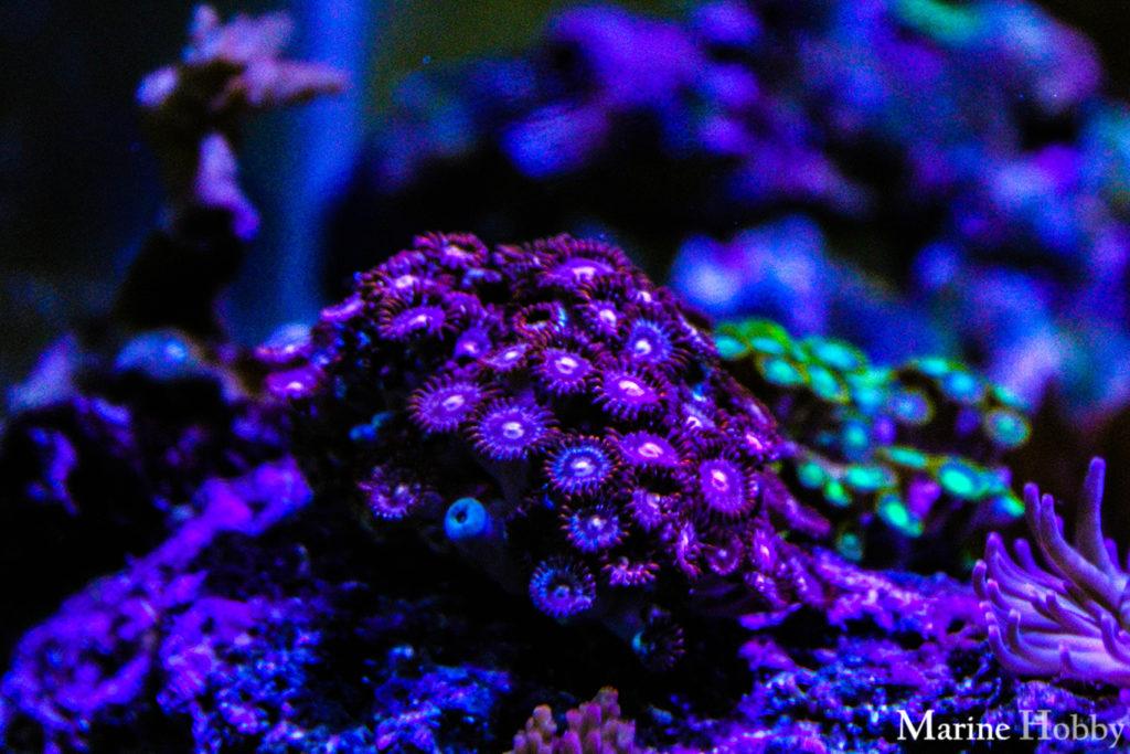 Photo of My Aquarium with some Toxic Corals