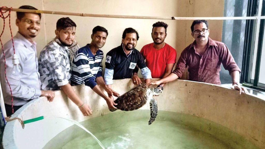 Photo of Taraporewala aquarium's turtle 'back' in a good health