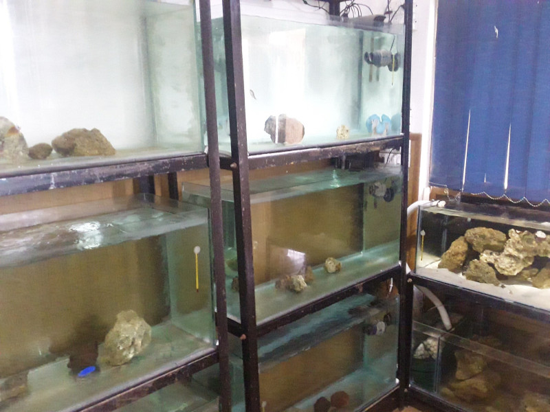 Photo of Home reef aquarium vs shop system, Home for marine life