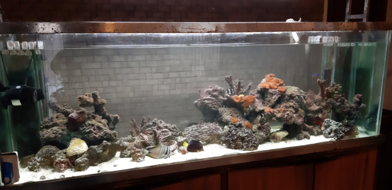 Photo of Which Marine Aquarium to Buy in India