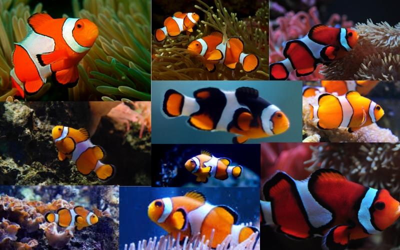 Photo of Update on Mumbai's Marine Biodiversity Center at Airoli