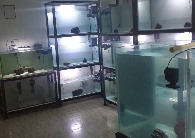 Photo of Marine Aquarium Near Me, Get Most of the Search in India