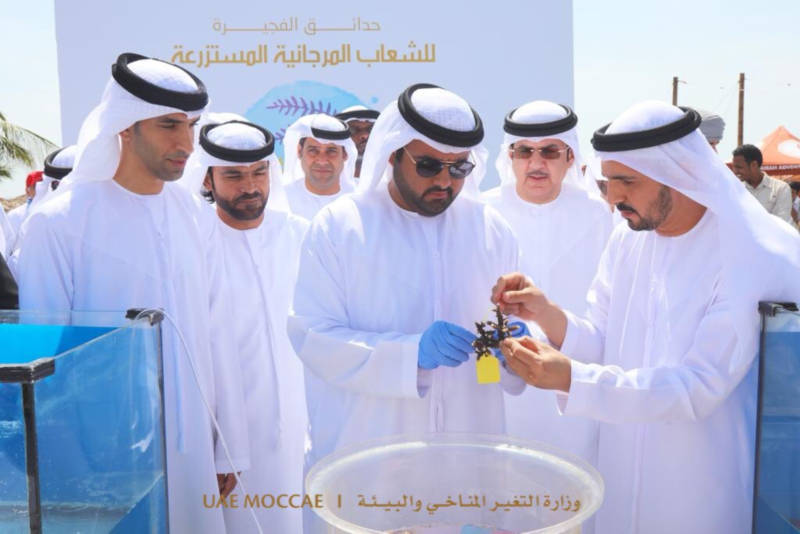 Photo of Coral reef garden project in UAE