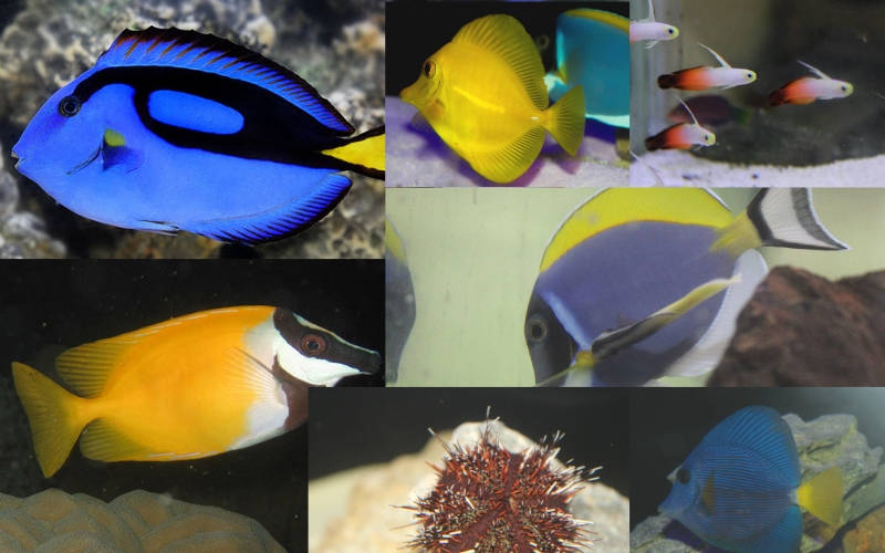 Photo of Reef Fish and Creatures for Saltwater Tank