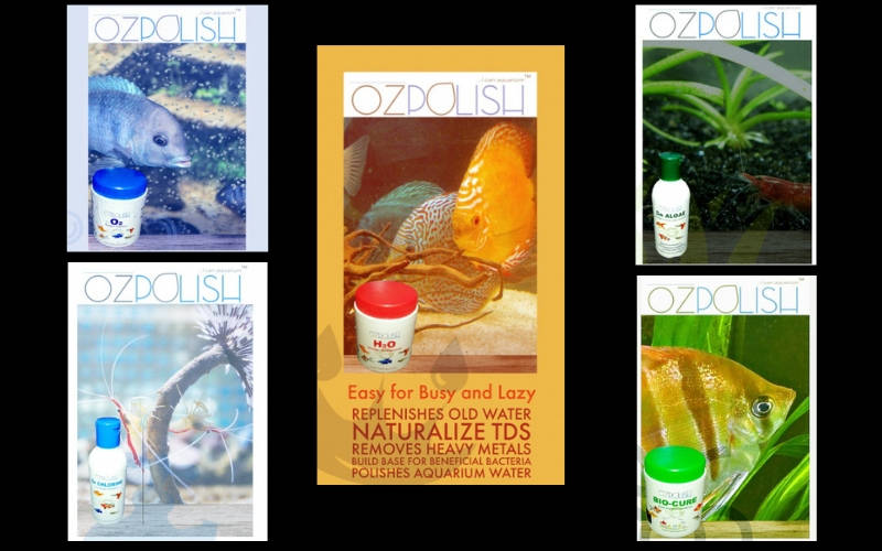 Photo of OZpolish by Aquatic Habitat, The Newest Indian Company