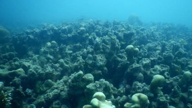 Photo of Ninety Percent of Sri Lanka's Coral Reefs Are Dead