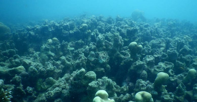 Ninety Percent of Sri Lanka's Coral Reefs Are Dead