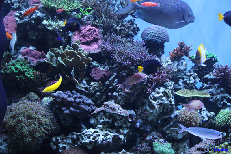 How to Setup Marine Aquarium in India