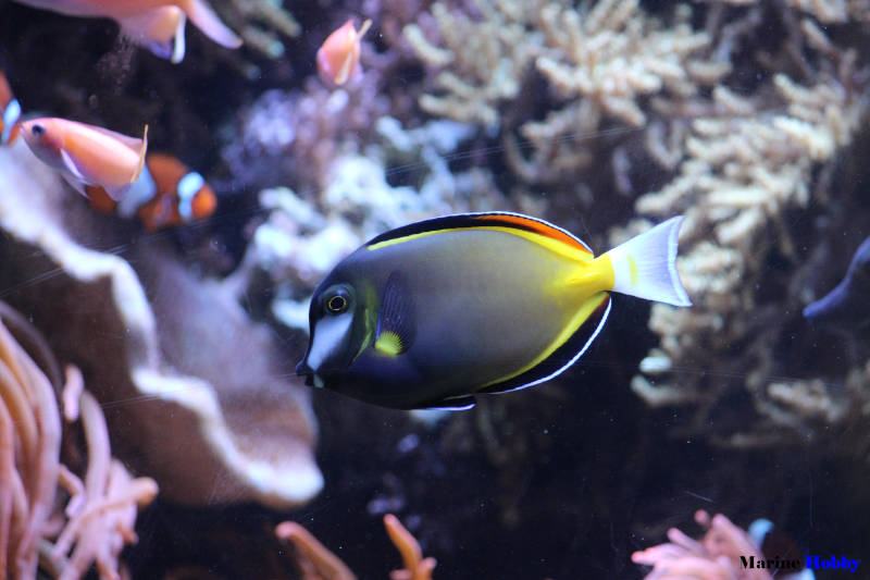 How to setup marine aquarium