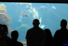 Photo of Multilevel Aquarium in Mumbai, State Tourism Department to Draft a Proposal